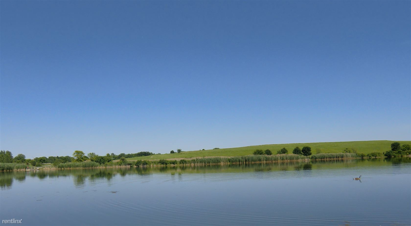 LSE pond 1