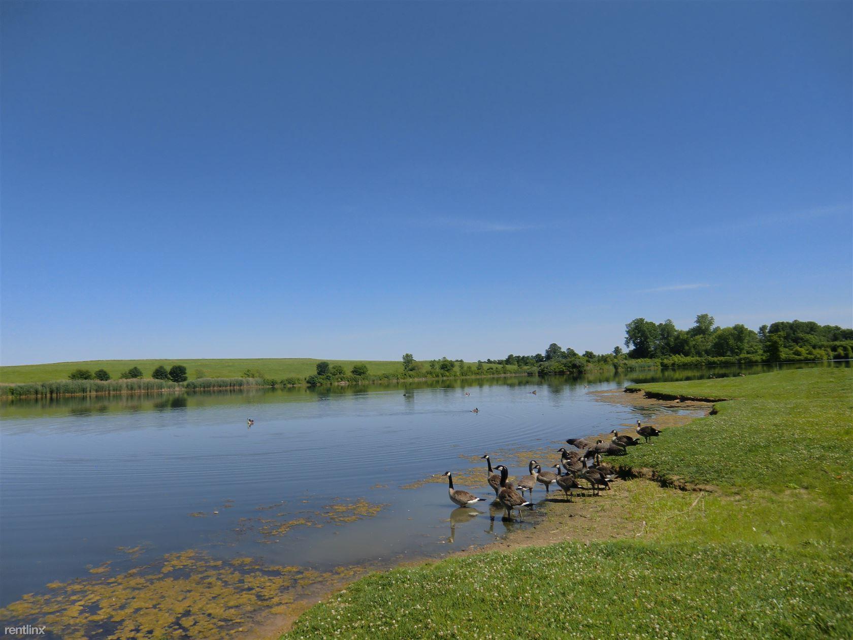 LSE pond