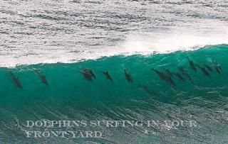 001-dolphinsDM_468x3002-1[1]