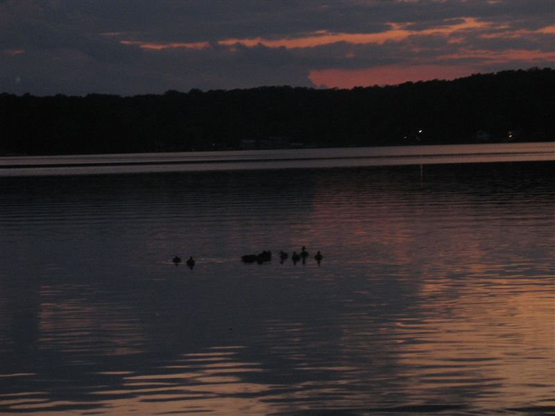 EVENINGS WITH DUCKS ON THE LAKE