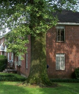 Garden Style (1-4 stories for Rent in Jonesboro